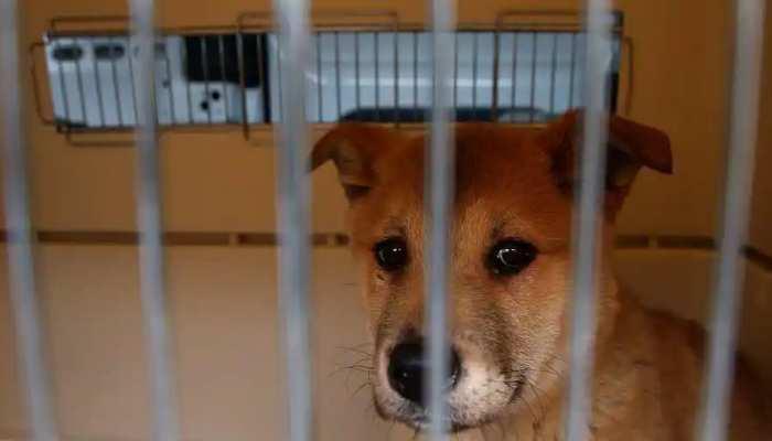 China का अवैध 'Blind Boxes' ट्रेंड बन रहा बेजुबानों का काल, छोटे डिब्बों में बंद करके बेचे जा रहे Animals