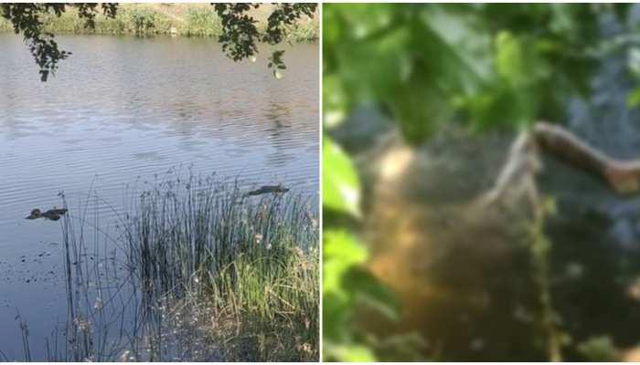 Exclusive: गंगा के बाद अब पन्ना की नदी में लाशों का सैलाब, तस्वीरें विचलित कर देंगी