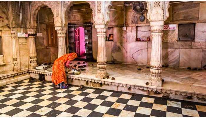 karni mata temple in rajasthan temple of rats india bikaner temple