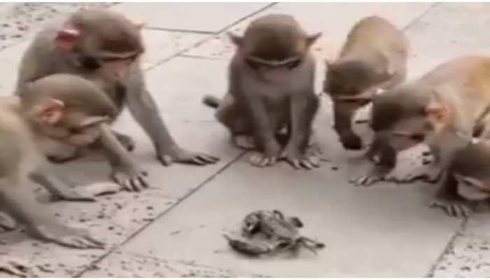 Viral Video: केकड़ा देखकर बंदरों ने की ऐसी हरकत, देखकर कोई भी हंसी नहीं रोक पाएगा