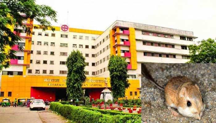 अव्यवस्थाओं का अस्पताल: नर्सरी में भर्ती नवजात के हाथ को चूहों ने कुतरा, मां देखने गई तब पता चला