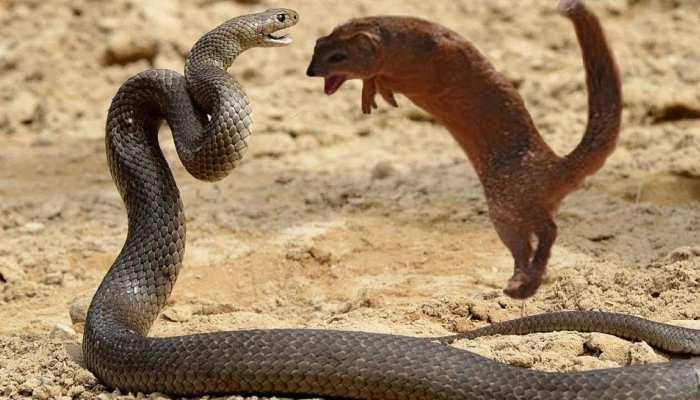 Sapne Me Saanp Dekhna: Dream में Snake दिखे तो हो सकते हैं कई शुभ-अशुभ संकेत, केवल कालसर्प दोष नहीं है वजह
