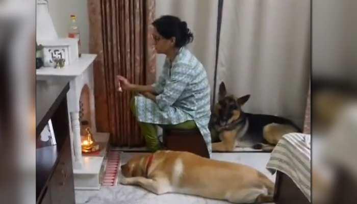 पूजा कर रही थी महिला, मंदिर के सामने सिर झुकाकर बैठा कुत्ता; देखें Video