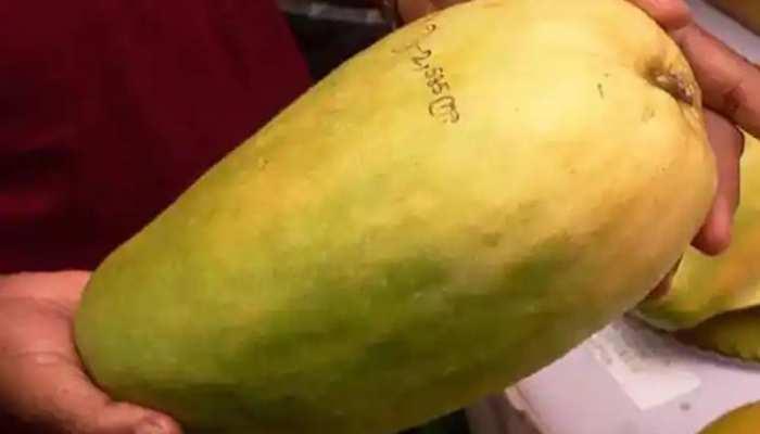 फलों की 'महारानी' है नूरजहां, एक फल की कीमत इतनी कि खाली हो जाए जेब