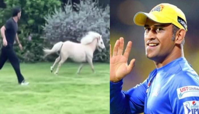 धाकड़ अंदाज में घोड़े के साथ रेस लगाते नजर आए MS Dhoni, पत्नी Sakshi Dhoni ने शेयर की वीडियो