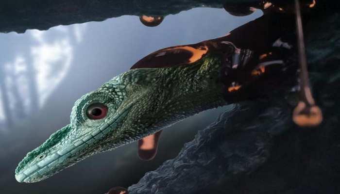 म्यांमार में मिला करोड़ों साल पुराना जीवाश्म, सच्चाई जान वैज्ञानिक भी रह गए हैरान