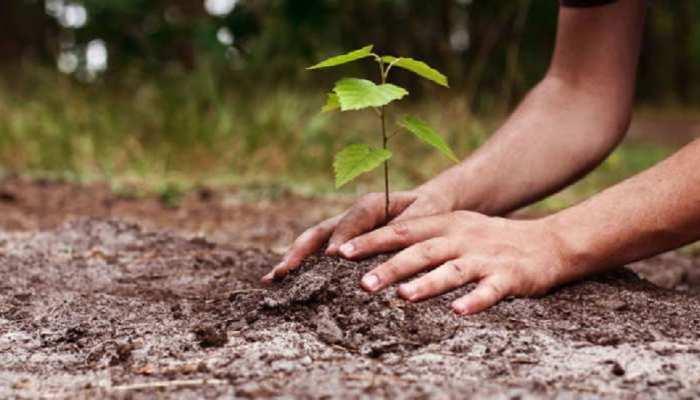 राजस्थान के शहरी क्षेत्रों को बनाया जाएगा हरा-भरा, 21 जून से शुरू होगा सघन वृक्षारोपण अभियान