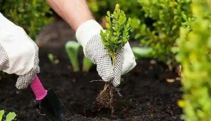 हर जिले में लगाए जाएंगे पोषण, ऑक्सीजन और दवा प्रदान करने वाले पौधे, बनेगी औषधि वाटिका