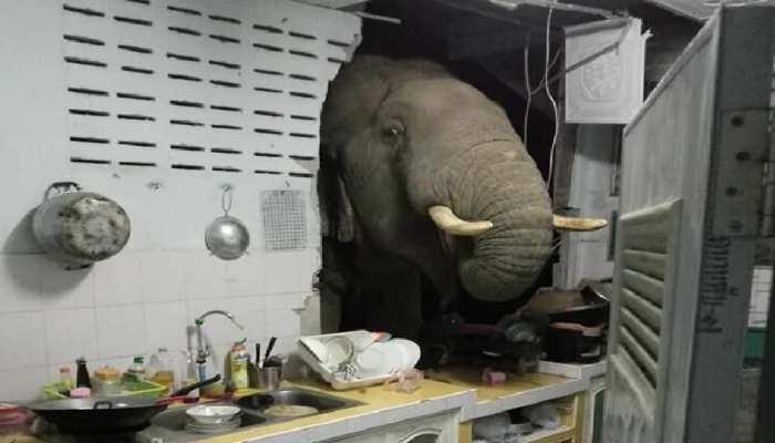 Thailand के घर में रात को आ रही थीं अजीब आवाजें, देखा तो किचन में खड़ा था भूखा Elephant, देखें Video