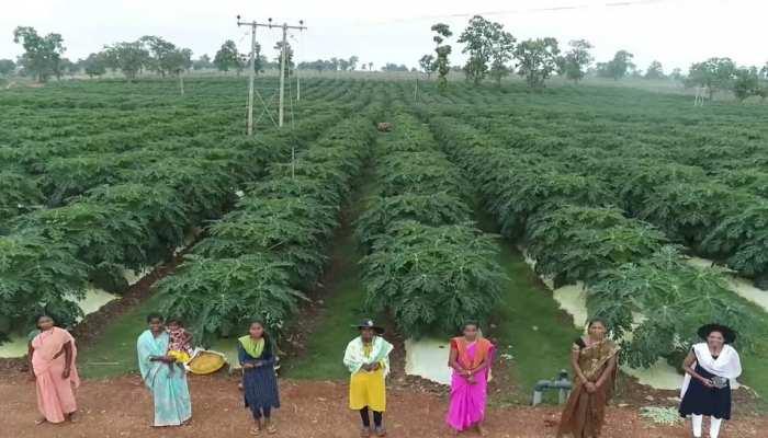 CM बघेल ने लॉन्च किया बस्तर पपीता प्रोजेक्ट, इसकी सामुदायिक खेती कमाकर देगी करोड़ों रुपये