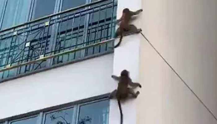 Video: ऊंची बिल्डिंग पर दो बंदरों ने दिखाया ऐसा करतब, जिसे देखकर ये मशहूर बिजनेसमैन हुआ हैरान