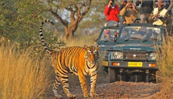 Rajasthan में आज से फिर खुले सभी टाइगर रिजर्व बायोलॉजिकल पार्क और चिड़ियाघर