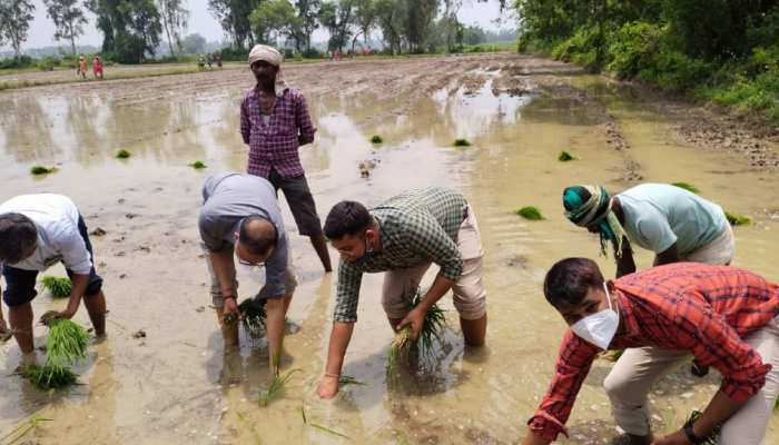 यूपी के इस जिले के DM ने पैंट-शर्ट पहनकर की धान की रोपाई, किसानों को दिए आधुनिक खेती की टिप्स