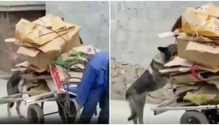 Viral Video: ठेले पर सामान ले जा रहा था शख्स, कुत्ते ने जमकर की मदद