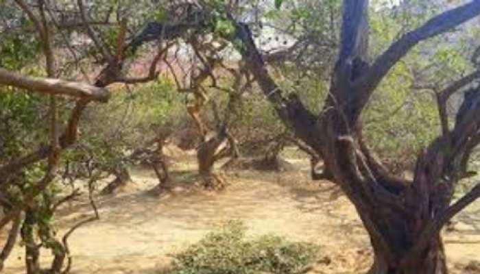 मथुरा के इस वन में छिपा है ऐसा राज, जिसने भी जाना वो इसकी हकीकत बताने के लिए नहीं रहा जिंदा!