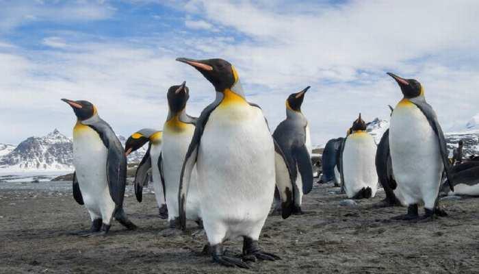 Shocking: क्या एलियन हैं पेंगुइन? वैज्ञानिक ने खोजा शुक्र ग्रह से इनका ऐसा कनेक्शन
