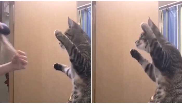 Cat Video: महिला को कॉपी करने लगी बिल्ली, वीडियो देखते ही जरूर छूट जाएगी हंसी