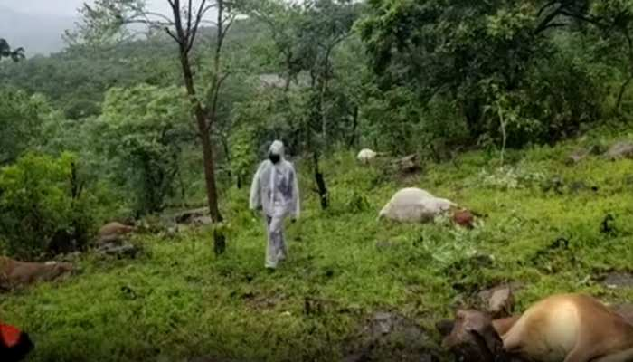 गुलाब चक्रवात का कहरः इस जिले में आकाशीय बिजली गिरने से 25 मवेशियों की हुई मौत