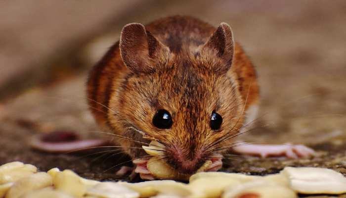 सनकी Boyfriend ने Girlfriend को चूहे का घोसला खाने को किया मजबूर, फिर हुआ ये