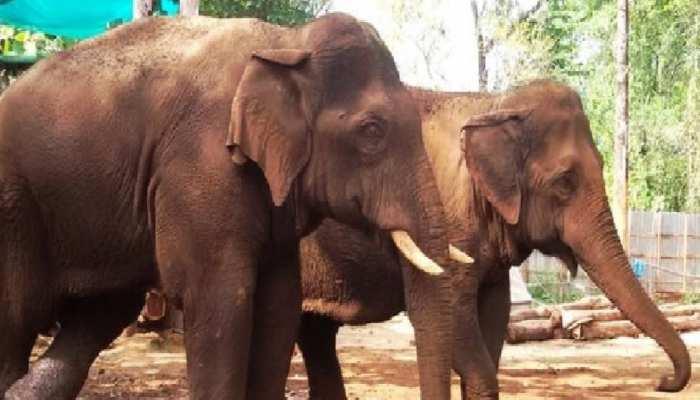 Dussehra 2021: मेले में बावला हो गया हाथी, जमकर मचाई तोड़फोड़, दहशत में लोग