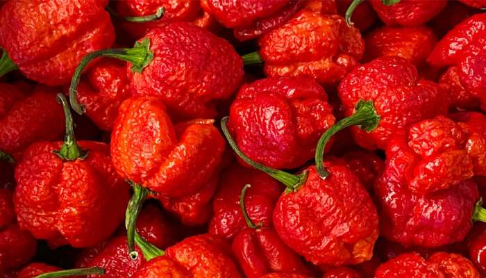 carolina reaper is the worlds hottest chili the name of the eater will be recorded in the Guinness Book