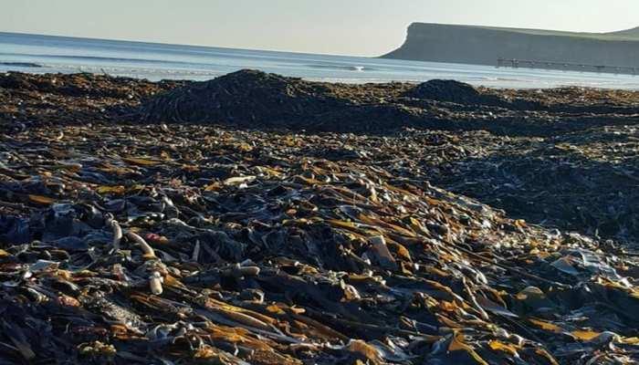 समुद्र के किनारे मरे मिले हजारों जानवर, सोशल मीडिया पर फूटा लोगों का गुस्सा