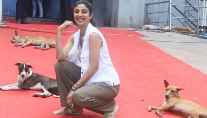 कुत्तों के बीच बैठकर शिल्पा शेट्टी ने कराया फोटोशूट, पापाराजी बोले 'लॉयल फॉलोअर हैं'