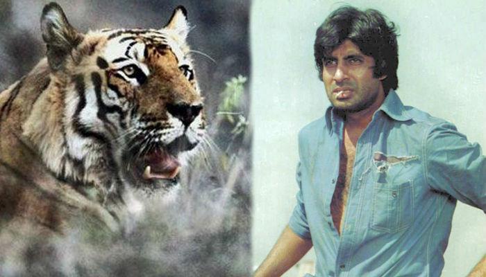 40 साल पहले एक सीन के लिए बिना सेफ्टी गियर के असली बाघ से लड़ गए थे अमिताभ